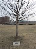 Image for Carl & Varene Anderson -- Delano Park, Wichita KS