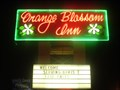 Image for ORANGE BLOSSOM - Neon