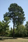 Image for Historic Washington State Park Moon Tree
