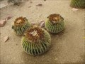 Image for Cacti Mickey - Anaheim, CA