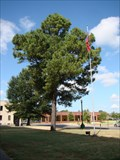 Image for Sebastian County Courthouse Moon Tree - Ft. Smith, AR
