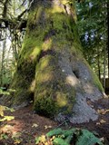 Image for Harris Creek Sitka Spruce