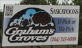 Image for Graham's Groves -- nr Carman MB