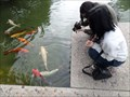 Image for Feeding the Koi and Ducks  -  San Jose, CA