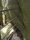 Image for Tree Eating Fence, Chirk Castle Gardens, Chirk, Wrexham, Wales, UK
