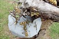 Image for Bee Hive  - Drummond, Montana