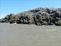 Image for Croisière d'observation du petit pingouin, Berthier-sur-Mer, Qc, Canada