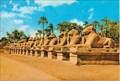Image for The Sphinx Avenue - Karnak