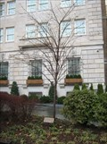 Image for Iue Family Tree - Washington, DC