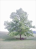 Image for Lincoln State Park Moon Tree - Lincoln, IN