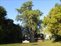 Image for Lakeside Cemetery Cottonwood
