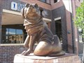 Image for Chelsea, the Dog – Sioux Falls, SD