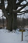 Image for The Grandpa Tree - N. Java, NY