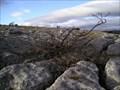 Image for Hampsfell limestone pavement, Cumbria