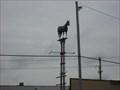 Image for Quarter Horse - Anderson's Western Wear - Joplin, MO
