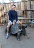 Image for Bronze Tortoise - Encinitas, CA