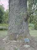 Image for Boyd & Parker Memorial Tree, Cuylerville, New York