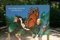 Image for Butterfly Flight School -- San Antonio Zoo, San Antonio TX