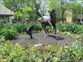 Image for Misty - Lexington, KY