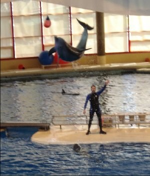 The Red Ball the Dolphin is jumping for is about 20 ft above the surface of the water.