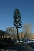 Image for Pine Tree Cell Tower at Sonic - Flagstaff, AZ