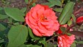 Image for Peter Wing Rotary Rose Garden - Kamloops, BC