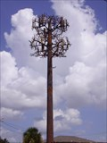 Image for Metairie's Disguised Cell Tower