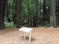 Image for Chandler Grove Trailhead - Humboldt Redwoods SP - California