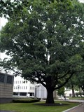 Image for George Washington Bicentennial Tree - Trenton, NJ