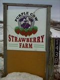 Image for Purple Cow Strawberry Farm, Greely, Ontario