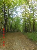 Image for Forest on Dilj mountain - Slavonia Region, Croatia