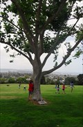Image for Anna Kerlick Tree  -  San Diego, CA