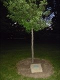 Image for Dedicated Tree - Rush Rhees - Rochester, NY