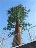 Image for Fake Tree Cell Tower - Pittsford, NY