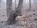 Image for SADDLE TRAIL TREE