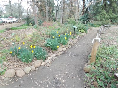 daffodils, narcissus, lily of the valley,
