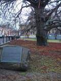 Image for Newport RI - Liberty Tree