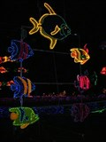 Image for Zoo Lights at the Oregon Zoo