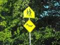 Image for Squirrel crossing - Santa Cruz, California
