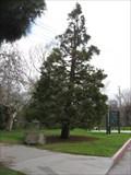 "Image for William ""Bill"" A Wilson - Central Park - Santa Clara, CA"