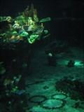 Image for The Seas with Nemo Aquarium Rocks Hidden Mickey