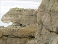 Image for Pancake Rocks Lion - Paparoa National Park - Punakaiki, New Zealand