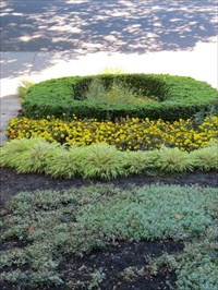'O' Topiary, Looking North, UO, Eugene Oregon