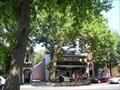 Image for Historic Buttonwood Tree - Haddonfield, NJ