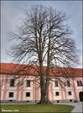 Image for The Convent' Lime / Klášterní lípa - Milevsko Premonstratensians Convent  (South Bohemia)
