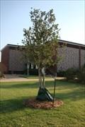Image for President Roger Webb tree - University of Central Oklahoma - Edmond, OK