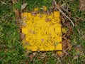 Image for Survey Mark 6321, Lithgow, NSW.