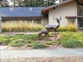 Image for Deer - Los Altos Hills, CA