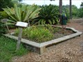 Image for USF Botanical Gardens Carnivorous Plant Bog - Tampa, FL
