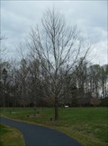 Image for Second Generation Moon Sycamore - Sloan Park, Mt. Ulla, NC